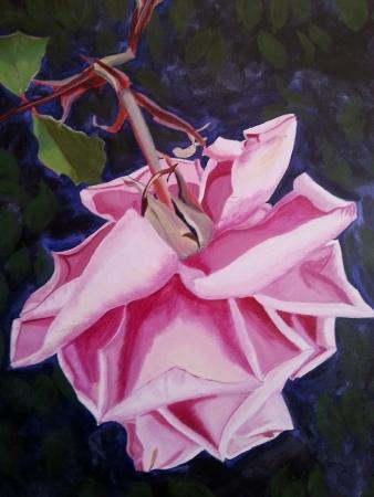 elegance_rose